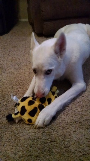 @HearDoggyToys  Review