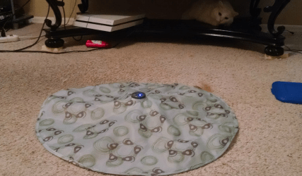 Pet Links Mystery Motion Cat Toy #Review