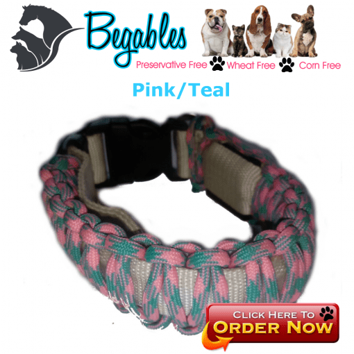 Pink/teal LED collar