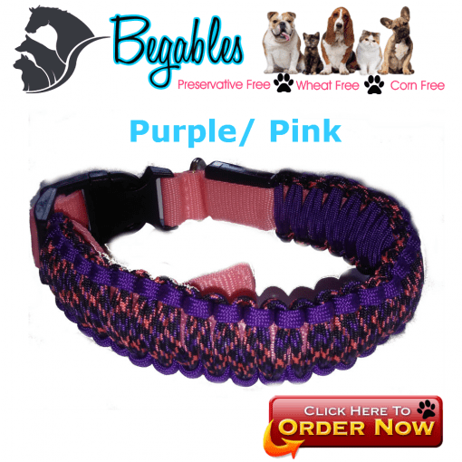 Purple and pink LED collar