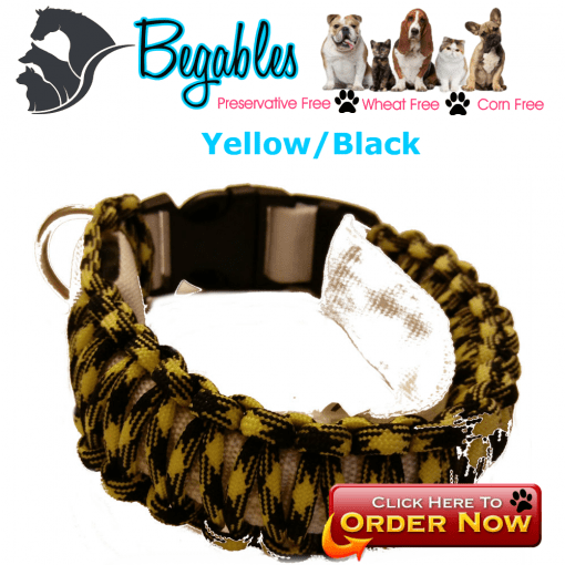 Yellow Black LED Collar