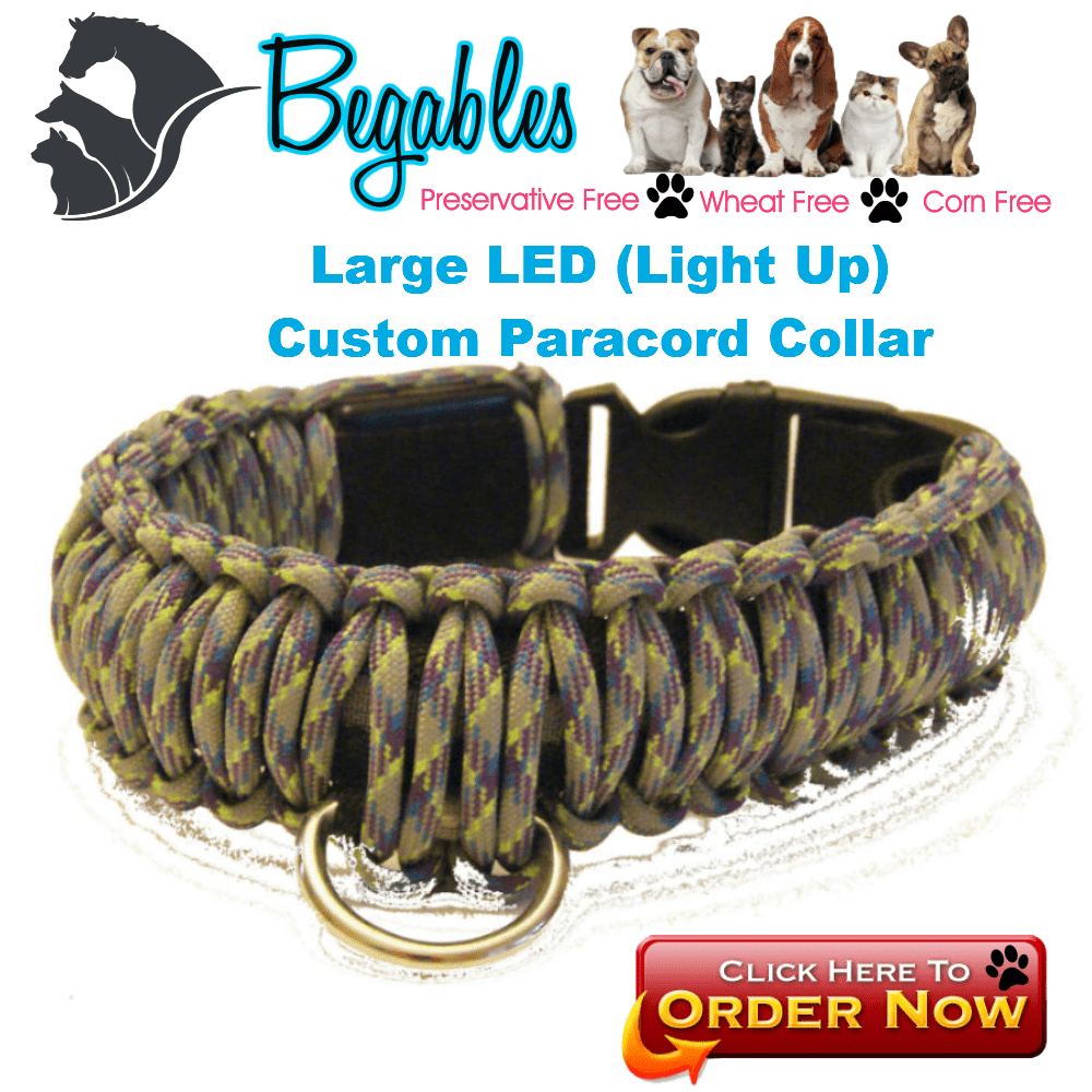 Large LED Collar