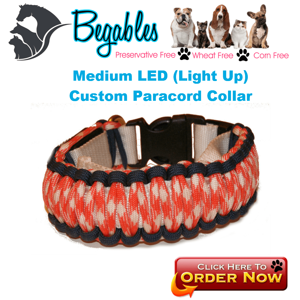 Medium LED Collar