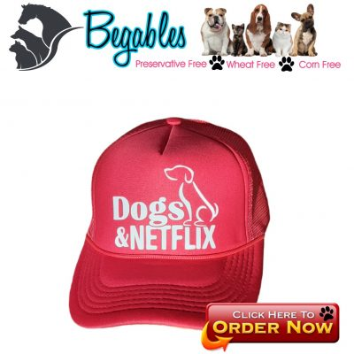Dogs and Netflix hat